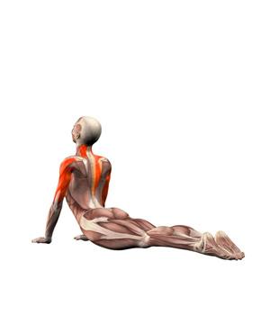 Bhujangasana - Postura de la Cobra - Yogateca 0bffbec2d57f