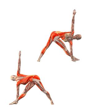 Parivrtta-Trikonasana-musculacion