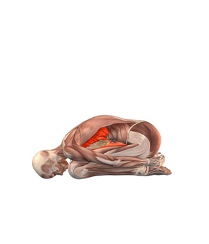 balasana  postura del niño  yogateca