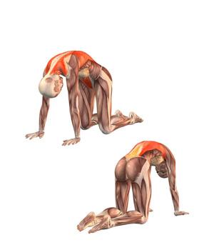bilikasana-musculacion