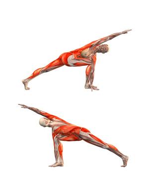 parivrtta-parvakonasana-musculacion