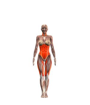 tadasana-musculacion