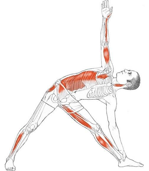 utthita-trikonasana-musculacion