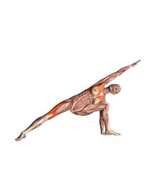 uttihita-parvsakonasana-musculacion