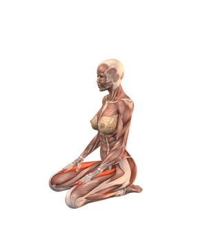 vajrasana-musculacion