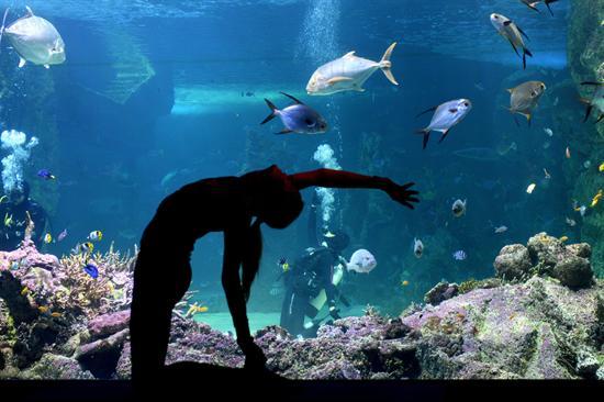 yoga-acuario