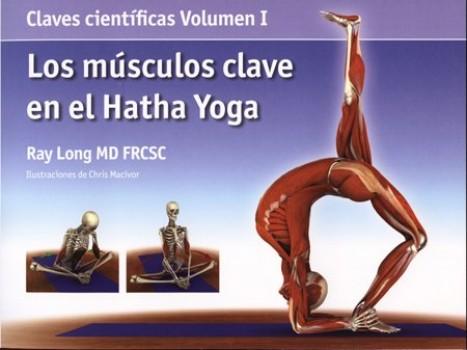 Los-msculos-clave-en-el-hatha-yoga-Claves-Cientificas-acanto-0