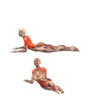 media-cobra-musculacion
