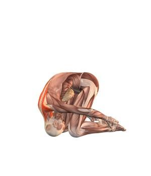 sasangansana-musculacion
