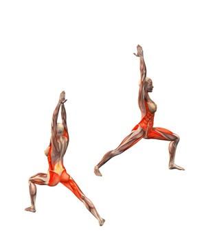 virabhadrasana-musculacion
